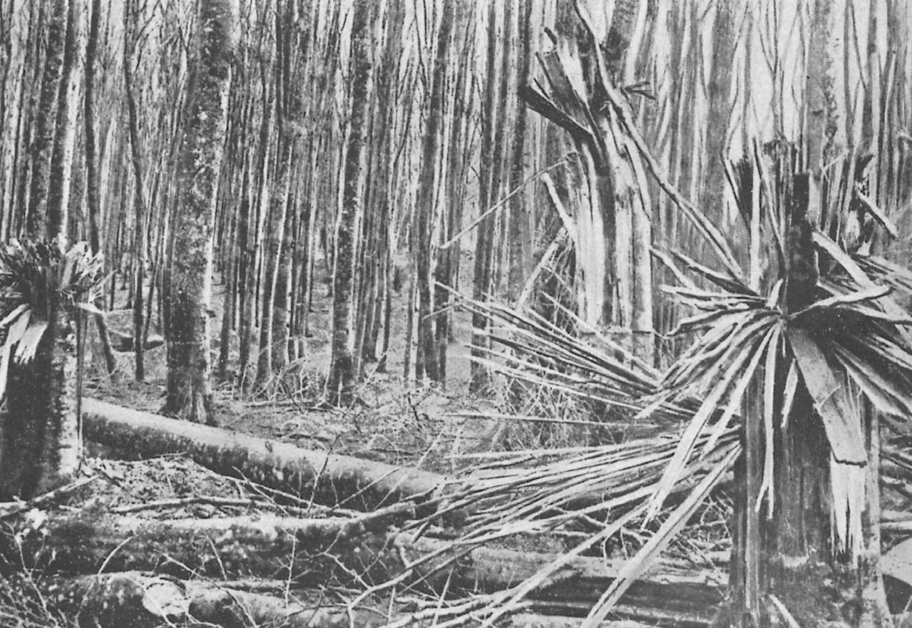 Forêt bombardée au HWK