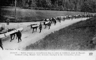 Convoi mulets vers goldbach