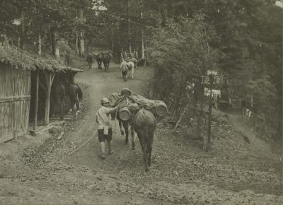 entree-camp-hoche-mulets-de-ravitaillement-15-octobre-1916-1.jpg