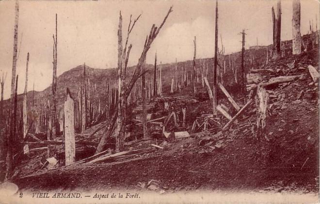 foret-devastee-secteur-minenweg.jpg